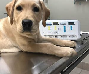 Electrosurgical unit for Vet Clinic